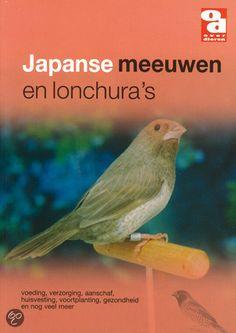 Japanse meeuwen komen niet in de vrije natuur voor en zijn #8216;ontwikkeld#8217; in Japan. Hun naam doet vermoeden dat het om een grote vogel gaat, maar ze zijn nog kleiner dan een kanarie.