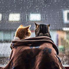 Günaydın☺️☔️Yağmurlu bir hafta sonuna uyandık ama olsun biz yağmuru çok severiz, pek güzel kahve içilir, kitap okunur pencere önünde, ya da mutfağa girilip çıkarılır tarif defterleri terapi niyetine☕️ #dekoraman #günaydın #pazar #yağmur #yapmurkeyfi #goodmorning #haveaniceday #sunday #weekend #rainy #relax #instagood #instalike #inspiredaily (via pinterest)