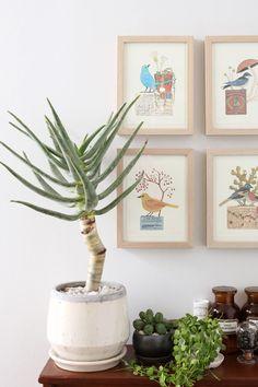 アロエ・ディコトマ / Aloe dichotoma