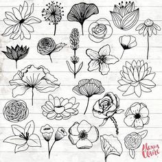 Flowers Clipart 23 Hand Drawn Floral Cliparts Realistic Floral Logo Art Flower Logo Elements Flower vector is part of Flower sketches extendedlicense For any other extended commercial - Logo Floral, Flower Logo, Flower Sketches, Art Sketches, Drawing Flowers, Tattoo Flowers, Hand Drawn Flowers, Floral Drawing, Simple Flower Drawing