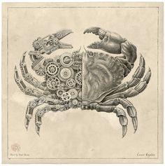 Steampunk Tendencies | MECHANICAL / BIOLOGICAL [Crustacean Study] ...
