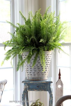 olive bucket with a bright green fern. love the mix of bright, new green and old and rusty.