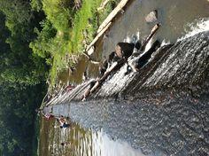 Eno River-Durham, NC