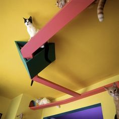 8 Amazing Cat Playgrounds For Your Home | Belipop