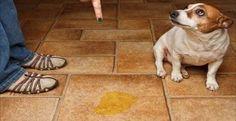 Incrível truque para evitar que seu cachorro urine onde você não deseja! | Cura pela Natureza