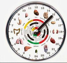 Organ clock