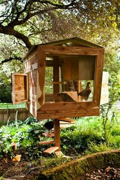 Tree house coop! Maybe ... if the shed has issues... whatever it is, It has to be bear proof .... =?