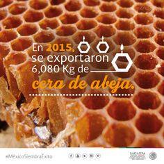 En 2015 se exportaron 6,080 KG, de cera de abeja. SAGARPA SAGARPAMX #MéxicoSiembraÉxito