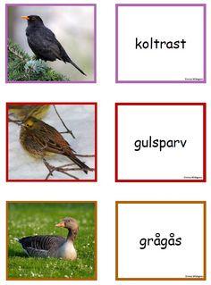 fågel3