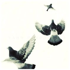 Black and white photography, Animals photography, Birds Flying, Bird... ($26) ❤ liked on Polyvore