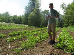 Ten Herbs for Transition, Jeff Carpenter of Zack Woods Herb Farm, part 1 – Numen News & Blog   Numen: The Healing Power of Plants