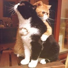 Ideas funny pictures of cats kittens kitty for 2019 Cute Kittens, Cats And Kittens, Cats 101, Fluffy Kittens, Animals And Pets, Baby Animals, Funny Animals, Cute Animals, Funniest Animals