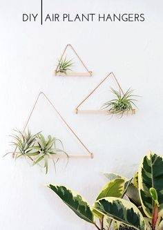 This project is great for people who aren't very crafty *or* very good at keeping plants alive: The planters are easy to make and air plants are easy to care for.Full tutorial at Homey Oh My. *** More info could be found at the image url. #inexpensivehomedecor