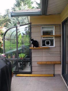 Cat Fence, Outdoor Cat Enclosure, Cat Run, Outdoor Cats, Cat House Outdoor, Outdoor Cat Cage, Indoor Outdoor, Outdoor Living, Cat Condo