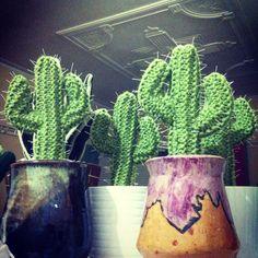 Arizona Cacti crochet