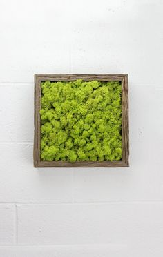 Green Moss Frame  Water free green wall art moss by FlowerboxUSA