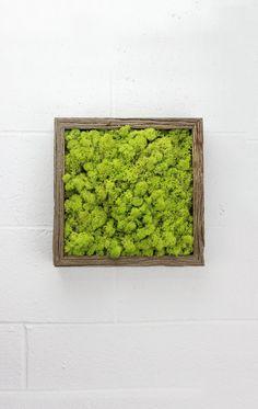 Green Moss Frame  Water free green wall art moss by FlowerboxUSA