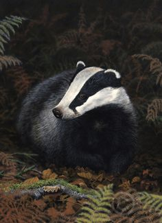Badger - by Nigel Artingstall Wild Creatures, Woodland Creatures, Woodland Animals, Animals Images, Animals And Pets, Cute Animals, British Wildlife, Wildlife Art, Beautiful Creatures