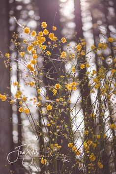 www.jodistilpphotography.com, landscapes, copyright Jodi Stilp Photography LLC, Tiny Blossoms - Tall Trees