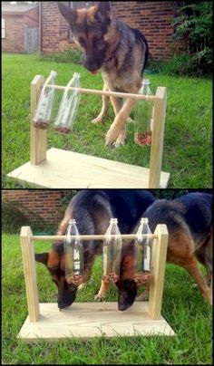 Keep your furry friends busy and entertained with this spinning plastic bottles dog treat game. Do you need one for your pets? - My Doggy Is Delightful Outdoor Dog Toys, Outdoor Dog Area, Dog Enrichment, Dog Playground, Playground Design, Diy Dog Toys, Homemade Dog Toys, Smart Dog Toys, Dog Yard