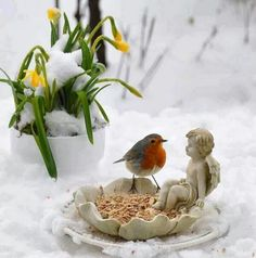 Hiver Robin Bird, Love Birds, Kinds Of Birds, All Birds, Little Birds, Beautiful Birds, Winter Snow, Winter Time, Robins