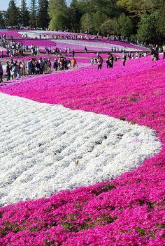 Hitsujiyama Park (羊山公園) Japan