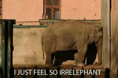 feeling irrelephant?