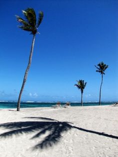 Palm trees cast shadows on the sand at the Nisbet Plantation Beach Club, a former sugar plantation that is now a seaside resort and spa on #Nevis #Island | The Washington Post