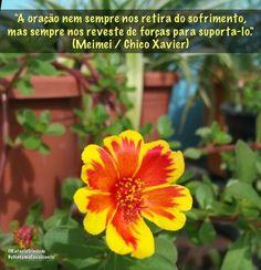 """""""A oração nem sempre nos retira do sofrimento, mas sempre nos reveste de forças para suporta-lo."""" (Meimei / Chico Xavier)"""