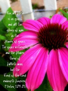 """""""The flower thereof falleth away..."""""""