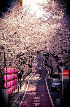 A place in Japan, Shibuya! Lovely road with alot of Sakura trees :) So romantic for lovers <3