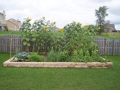 Vegetable garden: every home should have one. photo: Steve Cornelius.