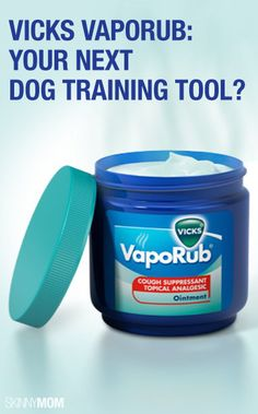 Get these household hacks on Vicks VapoRub. -Use to prevent cats from scratching furniture! -Or to prevent dogs from peeing in the wrong area (I'm thinking about substituting with natural eucalyptus oil instead) Training Tips, Dog Training, Georg Christoph Lichtenberg, Vicks Vaporub, House Ideas, Diy Stuffed Animals, Pet Health, Dog Care, Puppy Love