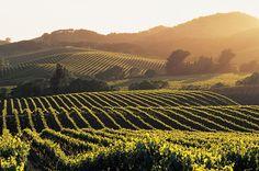 Découvrez les plus grand vins des Etats Unis - vins USA, Découverte des terroirs des Vins du monde, ancien et nouveau monde | ESTATE SELECTION