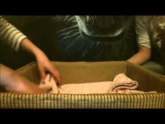 Opieka nad koteczkami ;) Zapraszamy na: https://www.youtube.com/channel/UCcUEW5Sp9rNFTqZL9i4JjEw  SUBUJCIE I LAJKUJCIE
