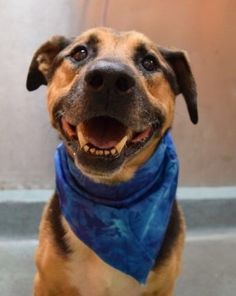 *** RETURN 8/24/17 PET HEALTH!! SAFE❤️❤️ 8/13/17 ❤️❤️ 11 YEARS OLD!! SUPER URGENT 08/06/17 Brooklyn Center ROSCOE – A1121051 **SAFER : EXPERIENCED HOME / NO YOUNG CHILDREN** MALE, BLACK / BROWN, GERM SHEPHERD / AM PIT BULL TER, 11 yrs OWNER SUR – EVALUATE, NO HOLD Reason NO TIME Intake condition EXAM REQ Intake Date 08/06/2017, From NY 11212, DueOut Date 08/06/2017, Medical Behavior Evaluation BLUE http://nycdogs.urgentpodr.org/roscoe-a1121051/