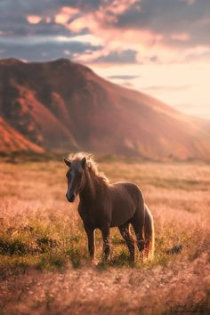 The horse in the golden light by LinsenSchuss on DeviantArt Cute Horses, Pretty Horses, Horse Love, Horse Photos, Horse Pictures, Most Beautiful Horses, Animals Beautiful, Cute Baby Animals, Funny Animals