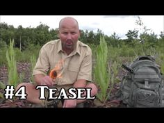 Teasel - Plant Identification, Uses and Folklore Plant Identification, Folklore, Herbs, Gardening, Water, Tips, Youtube, Plants, Gripe Water