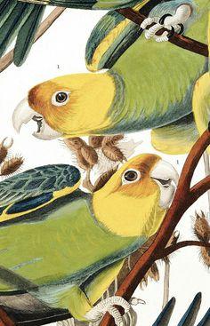 Bird Illustration, Illustrations, Parrot Painting, Black Interior Design, Printable Animals, Old Paper, Bird Prints, Vintage Signs, Art Pictures