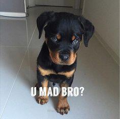 Love Rottweiler. Follow us!