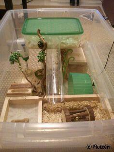 Hedgehog cage …