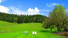 David Hill Vineyards and Winery on my birthday by Gayle Rich-Boxman David Hill, Countryside, Oregon, Golf Courses, Vineyard, Birthday, Beautiful, Vineyard Vines, Birthdays