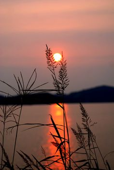 ✧ Mesmerizing Nature ✧ - sunset via tarantule by Beautiful Nature Wallpaper, Beautiful Moon, Beautiful Sunrise, Beautiful Landscapes, Sunset Photography, Amazing Photography, Landscape Photography, Sunset Pictures, Nature Pictures