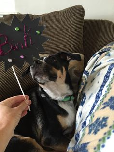 and making party photo prop signs are a must too! Party Fun, Party Photos, Best Part Of Me, Photo Props, Boston Terrier, Signs, Animals, Boston Terriers, Animales