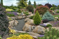 The conifer garden is a tranquil place full of inspiration.