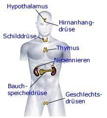 O sistema hormonal - Fitness Nutrition, Health And Nutrition, Health Tips, Rn School, Bodybuilding Nutrition, Naturopathy, Medical Care, Wellness Tips, Healthy Life