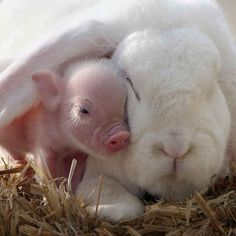 """This Rabbit Hates Me"" 
