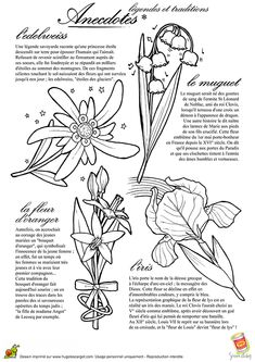 Stella alpina disegno cerca con google edelweiss and wildflowers in 2018 pinterest - Coloriage fleur edelweiss ...