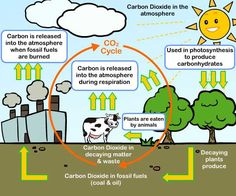 The carbon cycle best and most simple explanation c2 wk 4 carbon cycle c effects of fossil fuels on the climate ccuart Choice Image
