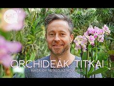 Így neveld az orchideád avagy a virágzás titka - videó - kert.tv Mirrored Sunglasses, Mens Sunglasses, Bonsai, Orchids, Flowers, Gardening, Cacti, Youtube, Naturaleza